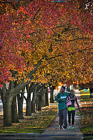 A high school couple walk together beneath golden fall leaves on trees lining a sidewalk in Westerville, Ohio.
