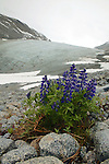 Glacier Scenic With Flowers