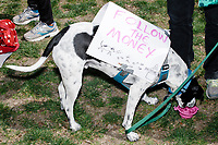 "A dog wears a sign reading ""Follow the Money"" in Cambridge Common during a Tax Day protest near Harvard Square in Cambridge, Mass., on Sat., April 15, 2017. The demonstrators called for President Donald Trump to release his tax returns. Trump refused to release his tax returns during the 2016 presidential campaign, in contrast to all previous major party presidential candidates, and continues to refuse to release them. The protest was part of a larger movement nationwide called Tax March."