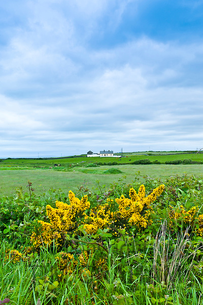 Smallholding farmhouse in County Clare, West of Ireland