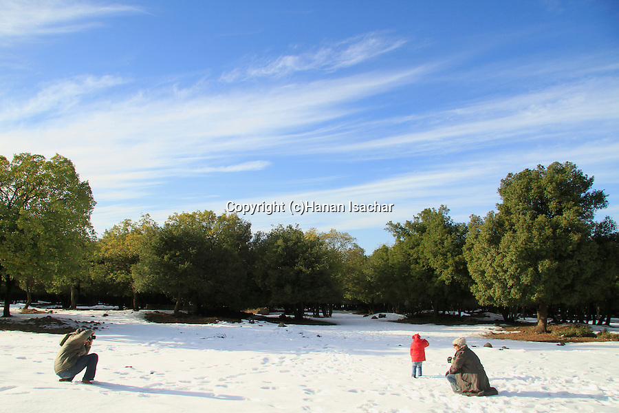 Golan Heights, snow in Odem forest