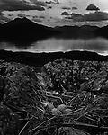 Gull's Nest, Isle of Skye 1947