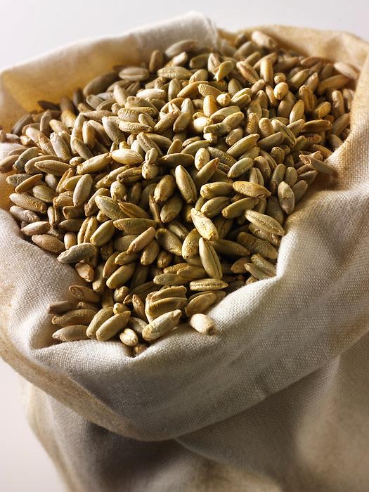 Organic Rye Grains - stock photos