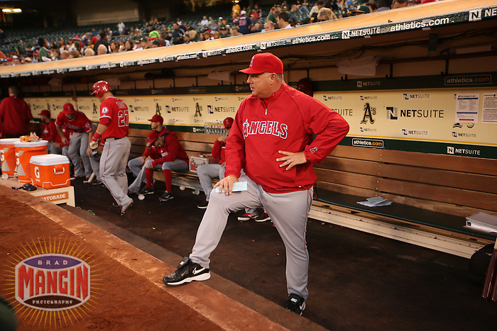 OAKLAND, CA - SEPTEMBER 22:  Manager Mike Scioscia #14 of the Los Angeles Angels gets ready in the dugout before the game against the Oakland Athletics at O.co Coliseum on Monday, September 22, 2014 in Oakland, California. Photo by Brad Mangin