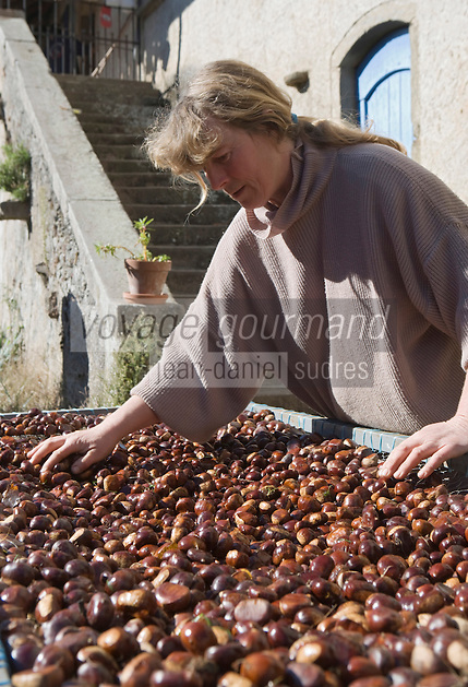 Europe/France/Midi-Pyrénées/81/Tarn/ Jouqueviel: Sabine Bourgeois trie  ses châtaignes qu'elle transforme  en crème de marons ou en marons au naturel- Produit de l'Agriculture biologique