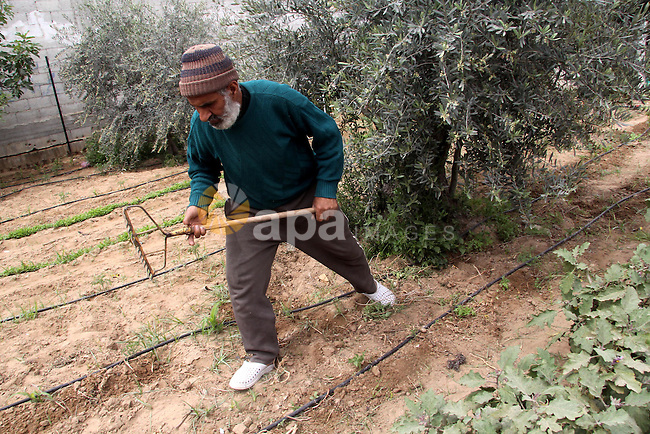 "A Palestinian farmer implants in his land on the occasion of ""Land Day"", in Gaza city, on March 30, 2013. Land Day commemorates the death of six Arab Israeli protesters at the hands of Israeli troops during mass protests in 1976 against plans to confiscate land in Galilee. Photo by Ezz al-Zanoon"