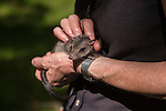 Margit Cianelli wildlife carer and real life Doctor Doolittle takes care of an endangered northern quoll baby.