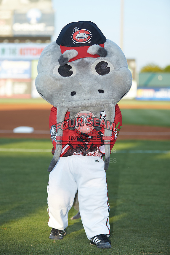 """Carolina Mudcats mascot """"Muddy"""" poses for a photo prior to the 2018 Carolina League All-Star Classic at Five County Stadium on June 19, 2018 in Zebulon, North Carolina. The South All-Stars defeated the North All-Stars 7-6.  (Brian Westerholt/Four Seam Images)"""