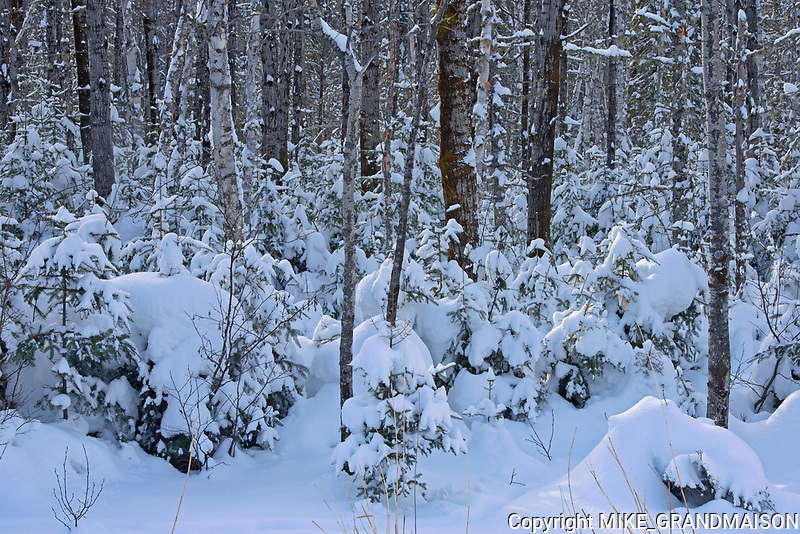 Boreal forest in winter<br />