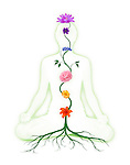 Woman sitting in lotus pose with seven chakra symbols represented as associated with chakras flowers and colors growing from a root chakra isolated silhouette on white background