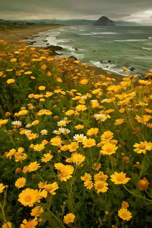 Wildflowers overlook Morro Bay on California's Central Coast