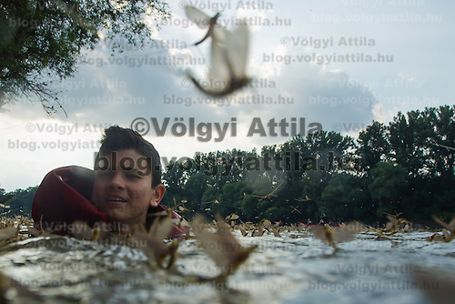A boy swims among insects during the yearly few days long swarming of the long-tailed mayfly (Palingenia longicauda) on the river Tisza in Tiszainoka (some 135 km south-east from Budapest), Hungary on June 23, 2013. ATTILA VOLGYI<br /> The long-tailed mayfly larves live 3 years under water level in the river banks then swarm out for a one day period of their life to die after mating.