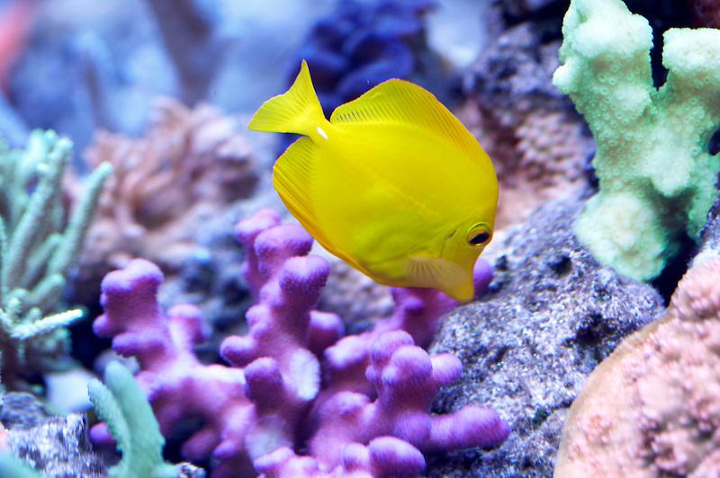 Tropical fish and Aquarium corals. Upscales store. Tualitin. Oregon