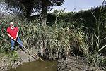Foto: VidiPhoto<br /> <br /> DODEWAARD &ndash; Ruim 400 jaar natuur- en oorlogsgeweld heeft de -naar eigen zeggen- oudste herberg (De Engel) overleefd. Een of meerdere bevers langs de dijk bij Dodewaard dreigen nu de historische horecagelegenheid ernstig te ondermijnen. Frappant genoeg werd tijdens het maken van deze reportage een vierde hol ontdekt, net onder het waterpeil van de historisch lage strang langs de dijk. Waar nu de strang meandert, stroomde eeuwen geleden de Waal. Enkele jaren geleden werden er in de uiterwaarden van Dodewaard bevers uitgezet, beschermde dieren waar je alleen maar naar mag kijken. Een prachtig gezicht als ze voorbij komen zwemmen op hun rug, vertelt eigenaar Inno Venhorst van De Engel maandag. Tijdens het hoge water van afgelopen winter zochten de dieren het echter hogerop en groeven enkele gangen in het talud van de waterkering voor de herberg. Waar die gang ophoudt is nog niet duidelijk, maar de kans is groot dat een bever bij nieuw hoog water zijn kop omhoog steekt op het terras, achter de waterkering. Bevers graven namelijk schuin omhoog. Met als gevolg dat De Engel onder water komt te staan. En drie maanden water in het pand betekent een faillissement. Maar niet alleen het restaurant van Venhorst, ook de dijk wordt bedreigd. Onder de wijngaard naast de herberg en voor de dijk, bevinden zich meerdere gangen. De grootste daarvan veroorzaakte vlak voor de druivenoogst een lelijk ongeval toen de restauranthouder er met zijn tractor wegzakte en vervolgens om sloeg. Foto: De zojuist ontdekte nieuwe gang.