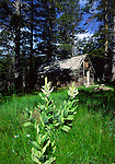 corn lily and old cabin near Blue Lakes