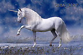 Bob, ANIMALS, horses, photos, GBLA3027,#a# Pferde, caballos