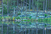Reflection of Precambrian shield rock and trees in Isabel Lake<br />