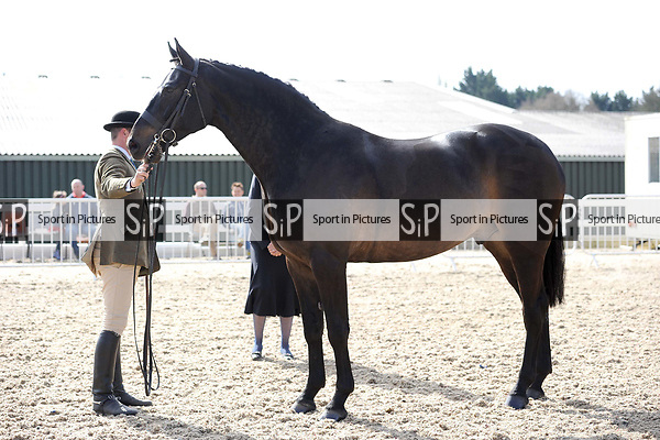 Classes 1 to 5. Brook Farm Equestrian Club Spring show. RIHS qualifiers. Brook Farm training centre. Stapleford Abbots. Essex. UK. 02/04/2017. MANDATORY Credit Ellen Szalai/Sportinpictures - NO UNAUTHORISED USE - 07837 394578