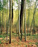 CHINA, Hangzhou, bamboo forest, Meijai Wu