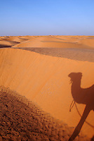 Shadow of camel on sand dune, Tunisia, Ksar Ghilane, Sahara Desert