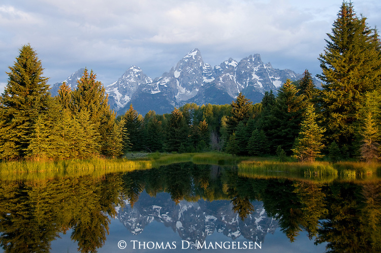 The tetons are reflected in the river at Schwabachers Landing in Grand Teton National Park, Wyoming.