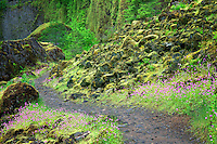 Trail into Tanner Creek. Columbia River Gorge National Scenic Area, Oregon
