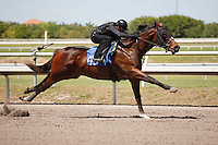 #93Fasig-Tipton Florida Sale,Under Tack Show. Palm Meadows Florida 03-23-2012 Arron Haggart/Eclipse Sportswire.