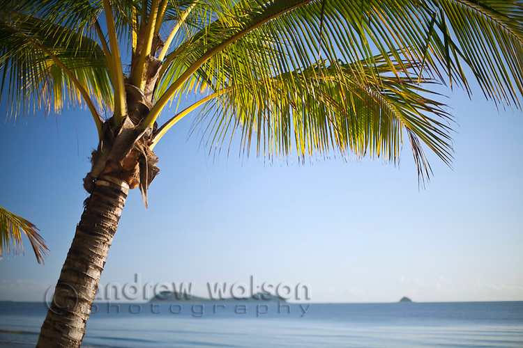 Coconut palm with islands in background.  Kewarra Beach, Cairns, Queensland, Australia