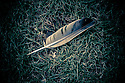 London, UK. 28.05.2016. A feather lies on the grass in Regent's Park. Photograph © Jane Hobson.