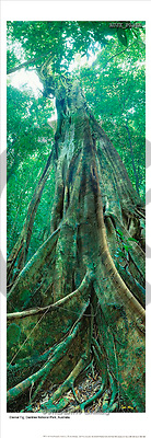 Dr. Xiong, LANDSCAPES, panoramic, photos, Daintree, Australia(AUJXP036A,#L#)