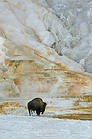 Yellowstone photo