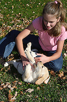 12 year old girl playing with yellow Labrador retriever puppy (AKC) in the fall.  Birchwood, WI