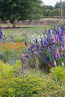 Hobby farm cutting garden for cut flowers to sell. Larkspur, calendula, bachelor buttons, poppies, cosmos, euphorbia, allium, etc