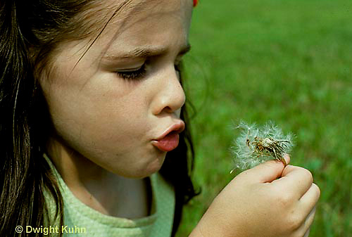 DN09-004z  Dandelion - girl blowing seeds -  Taraxacum officinale