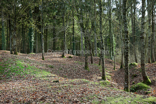 Woodland, originally the site of the village of Fleury-devant-Douaumont, Verdun, Meuse, Lorraine, France, which was completely destroyed in the Battle of Verdun in World War One. Prior to the war the village had 400 inhabitants but found itself on the front line, was destroyed and never rebuilt. Picture by Manuel Cohen