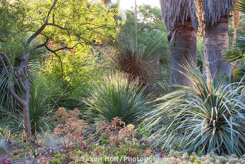 Morning light in drought tolerant California succulent garden beds and borders - Ruth Bancroft Garden Conservancy, Walnut Creek, California