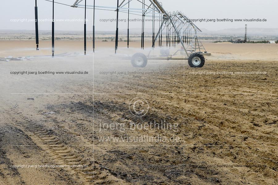 EGYPT, Bahariyya Oasis, Sekem organic farm, Project greening the desert , compost and Pivot irrigation for a new field with mint herbs / AEGYPTEN, Oase Bahariya, Sekem Biofarm, Landwirtschaft in der Wueste, Pivot Kreisbewaesserung fuer eine neues Feld