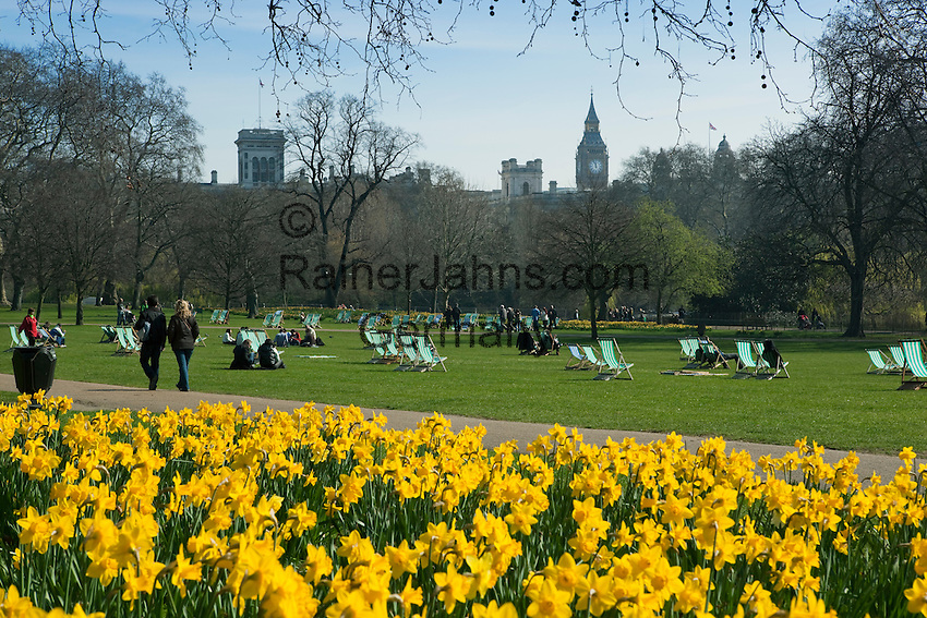 Great Britain, England, London: Spring Daffodils in Saint James` Park with Big Ben behind