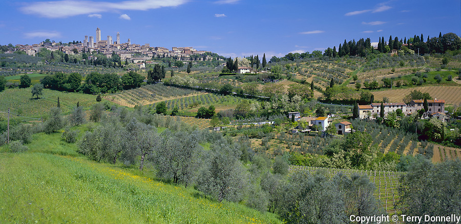 Tuscany, Italy, <br /> The distant hill town of San Gimignano rises above nearby vineyards and olive groves