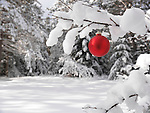 Red Christmas decoration outdoors on a snow covered tree branch in a winter forest. Artistic holiday background.