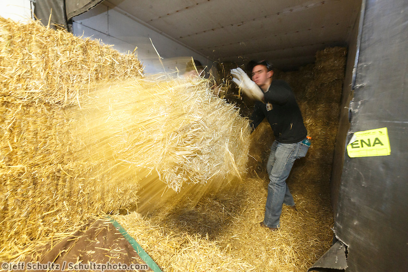Getting ready for Iditarod 2016, a volunteer throws a bale of straw out of the container van as  others bag, zip-tie, stack and shrinkwrap pallets of straw and hay on Thursday, February 11, 2016  at Airland Transport in Anchorage. Nearly 1700 bales will be sent out to over 20 checkpoints along the trail. Iditarod 2016