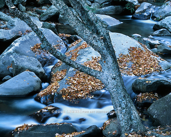 A DeadTree Along A Rocky Stream In The Great Smoky Mountains National Park, Tennessee, USA