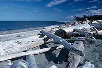 Haida Gwaii (Queen Charlotte Islands), Northern BC, British Columbia, Canada - Driftwood on North Beach in Rose Spit Ecological Reserve along McIntyre Bay, Naikoon Provincial Park, Graham Island