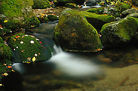 Water flowing around moss covered rocks in a stream , in Baxter State Park, Maine. .. Restrictions