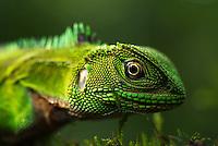 Ecuador reptiles 2014
