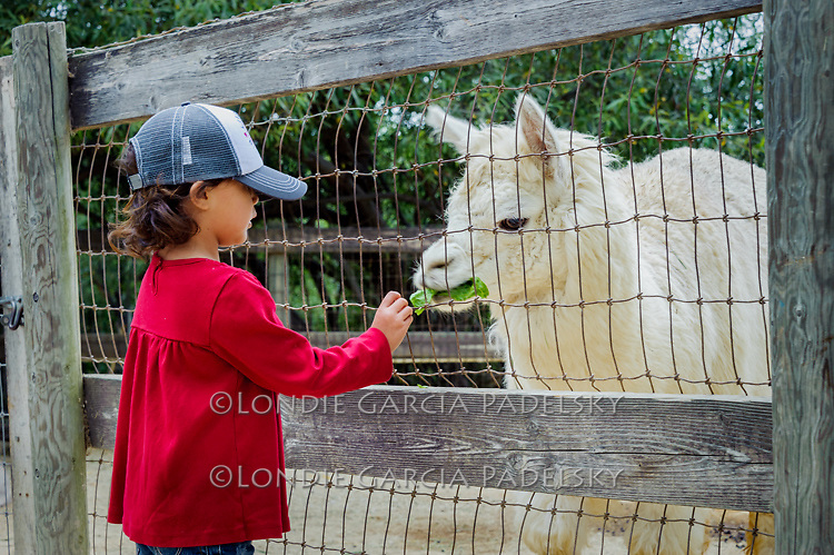 Petting zoo at Avila Valley Barn country store and farm stand on Avila Valley Beach Drive, San Luis Obispo County, California