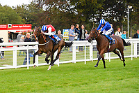 Winner of The Simpson Hilder Associates Supporting Gift Of Sight EBF Fillies' Novice Stakes,Star in the Making ridden by Adam Kirby and trained by Clive Cox  during Evening Racing at Salisbury Racecourse on 3rd September 2019
