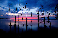 A line of weathered trees stands along the Pamlico Sound in North Carolina's Outer Banks. .Photography by: Patrick Schneider Photo.com