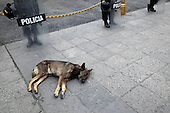 Riot Police with Sleeping Dog in Lima's Plaza de Armas, Peru