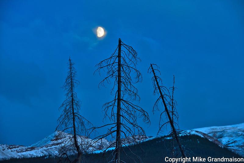 Moon rising and trees at Medicine Lake<br />Jasper National Park<br />Alberta<br />Canada